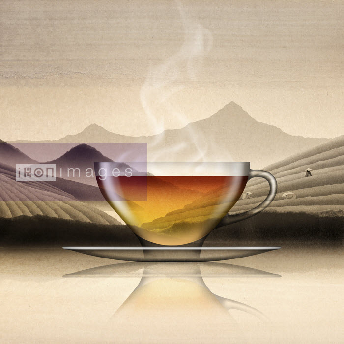 Glass of Chinese black tea in tea plantation landscape - Nick Purser