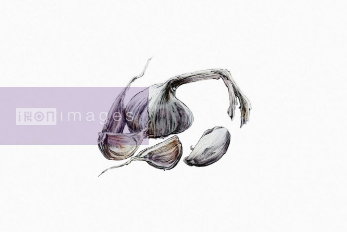 Watercolour painting of cloves of garlic - Katherine Coulton