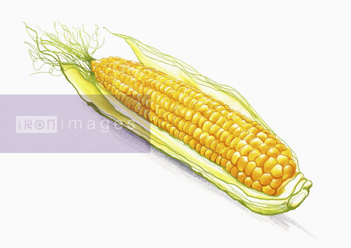 Corn on the cob - Amanda Dilworth
