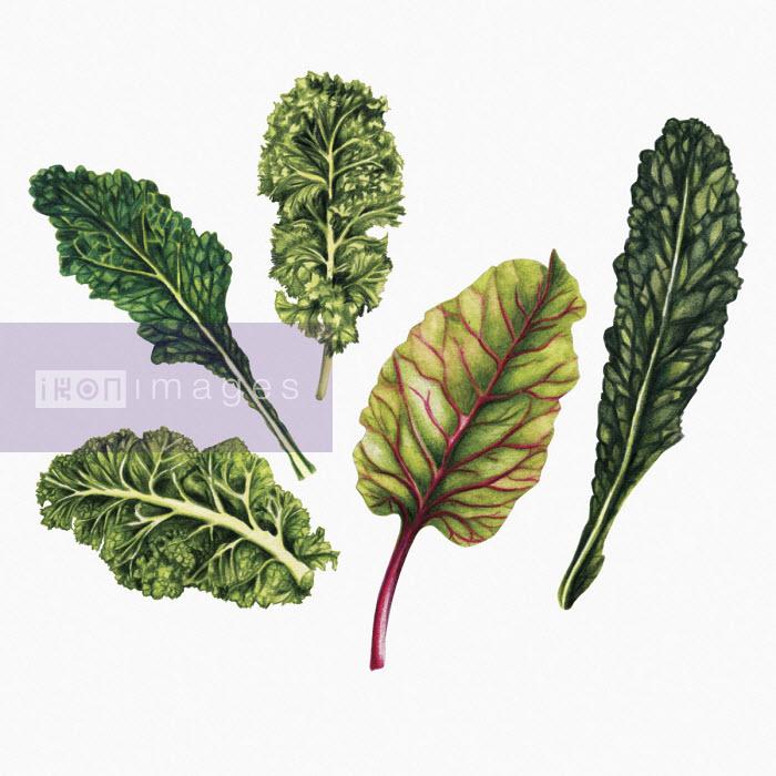 Leafy green vegetables - Amanda Dilworth