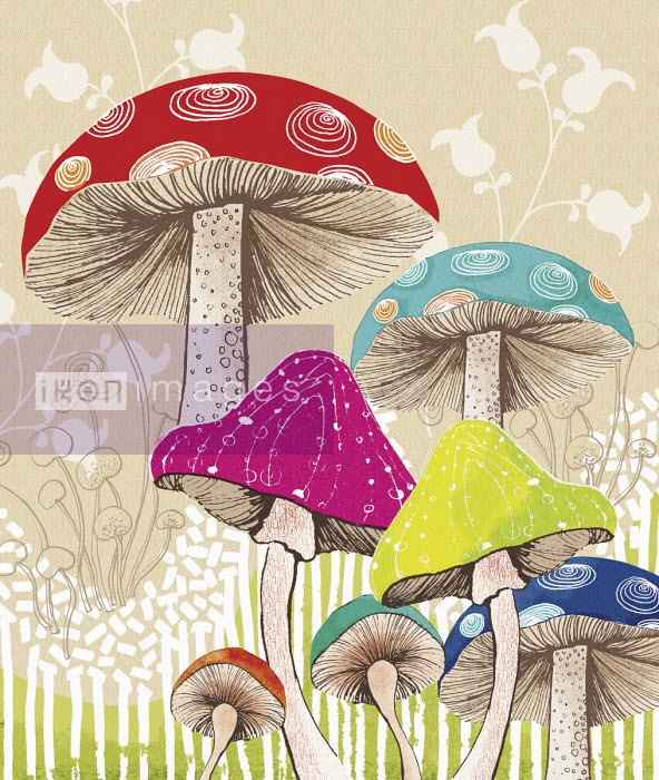 Multi coloured toadstools - Amanda Dilworth