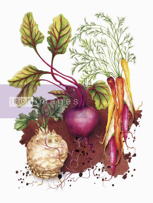 Root vegetables - Amanda Dilworth