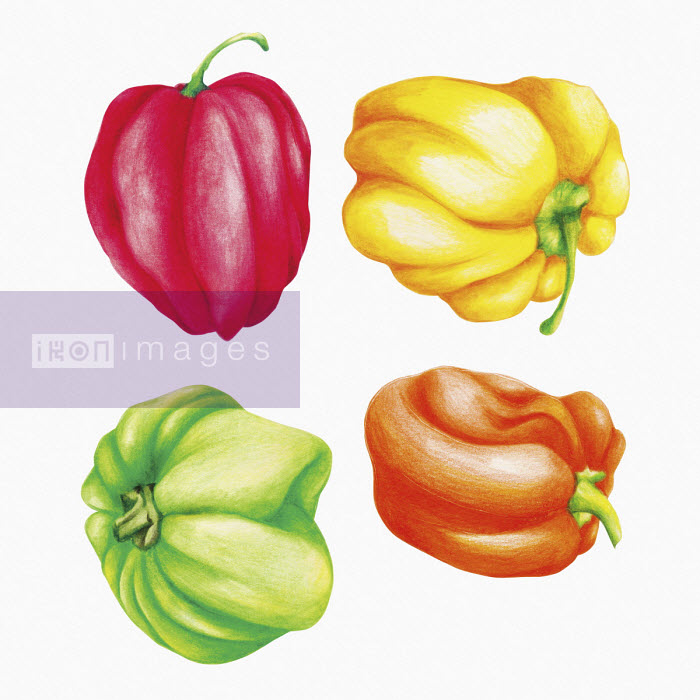 Different colour Scotch Bonnet chillies - Amanda Dilworth