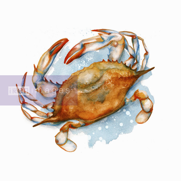 Soft-shell crab - Amanda Dilworth
