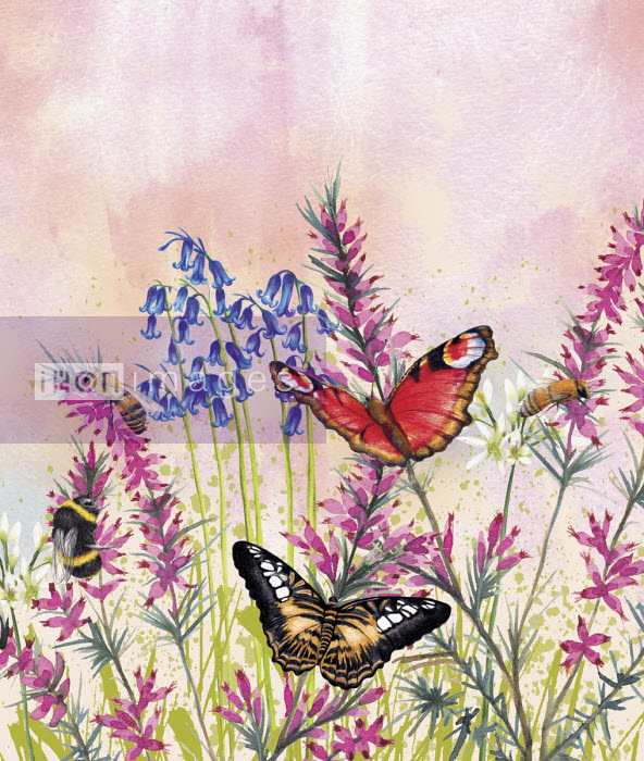 Bees and butterflies in spring meadow - Amanda Dilworth