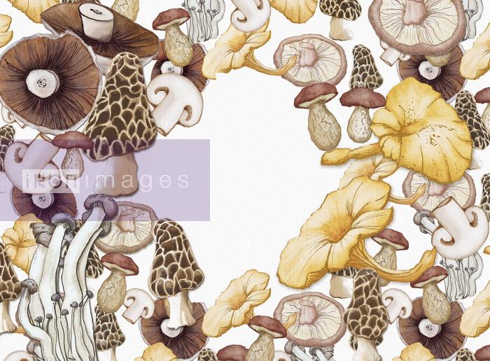 Different mushrooms - Amanda Dilworth