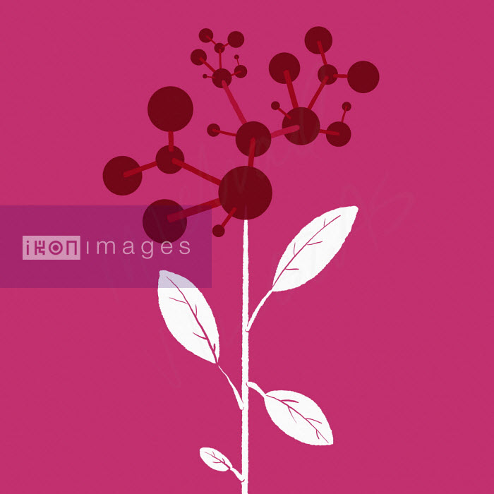 Plant with molecular model flowerhead - Michael Villegas