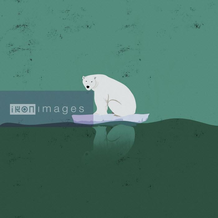 Polar bear sitting on tiny iceberg - Michael Villegas