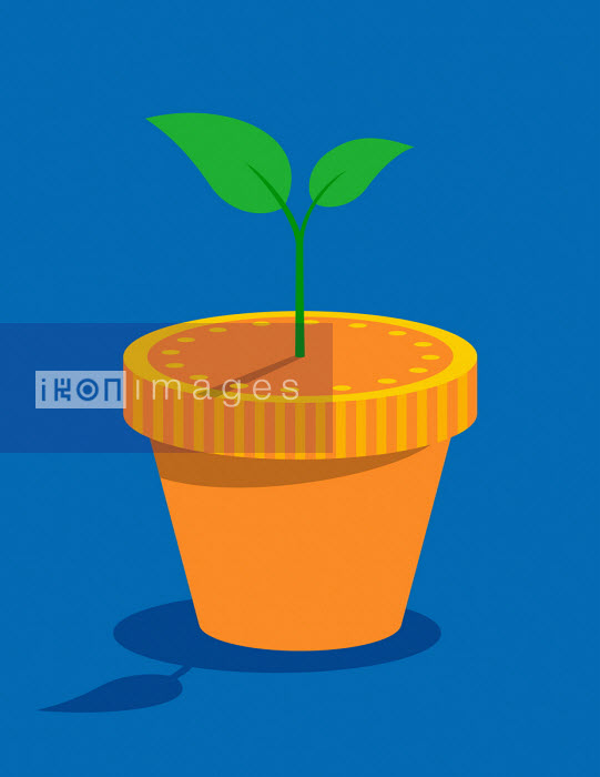 Plant growing from money plant pot - Patrick George