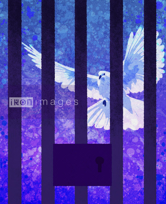 White dove behind prison bars - Rebecca Hendin