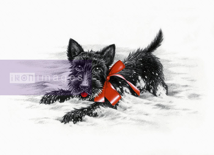 Cute black puppy with red bow - Andrew Beckett