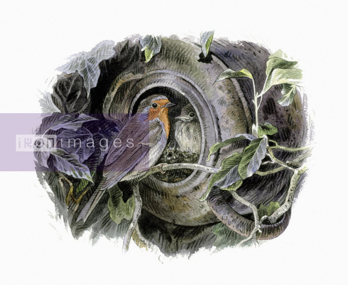 Illustration of robin with nest in overturned pot - Andrew Beckett