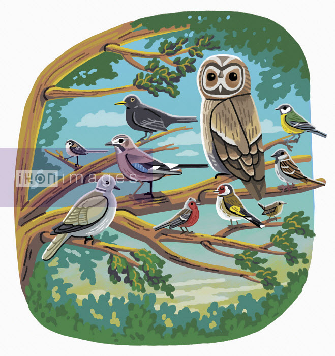 Various garden birds - Elly Walton