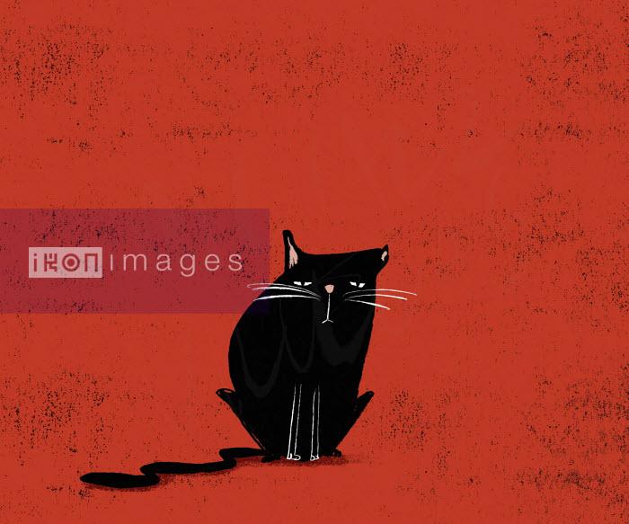 Grumpy black cat - Michael Villegas