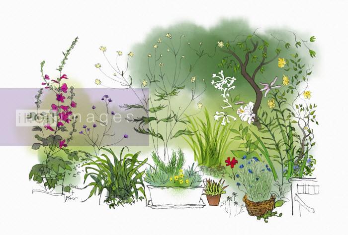 Summer garden plants in patio pots - Jan Bowman