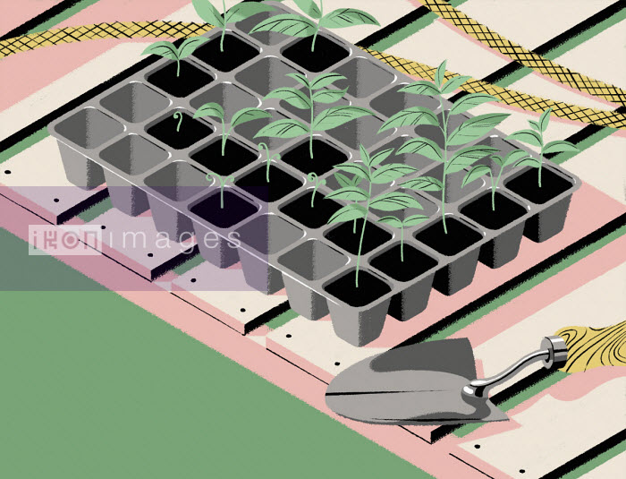 Seedlings in pound sign seed tray - Matt Harrison Clough