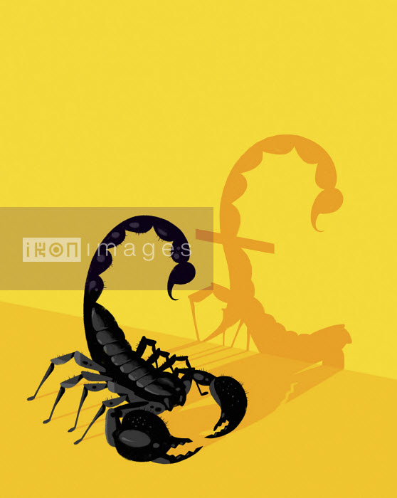Scorpion sting forming pound shaped shadow - Matt Harrison Clough