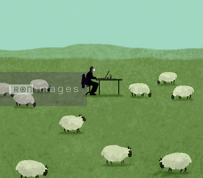 Man wearing face mask working at desk in field of sheep - Gary Waters