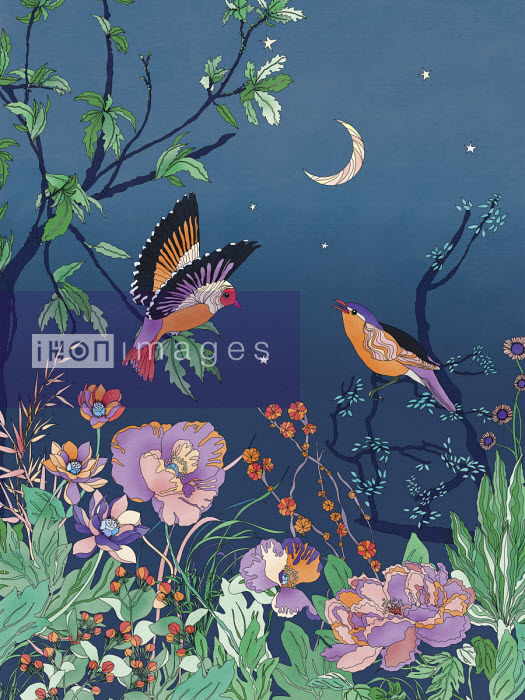 Pretty birds and flowers against night sky - ET