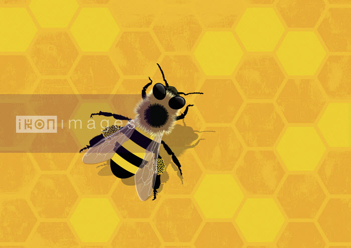 Bee bringing pollen to the hive - Paul Garland