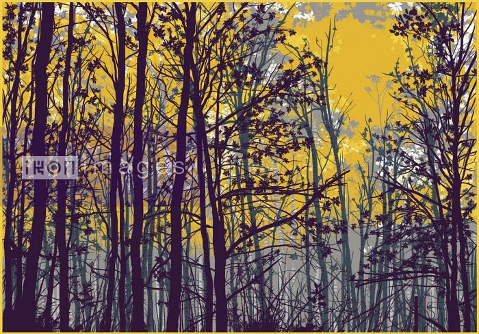 Yellow sky through autumn trees - Chris Keegan