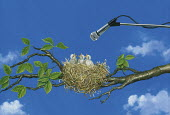Microphone above baby birds in nest