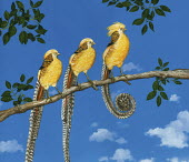 Yellow golden pheasant standing out from others on branch