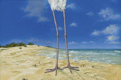 Close up on stork's legs on beach